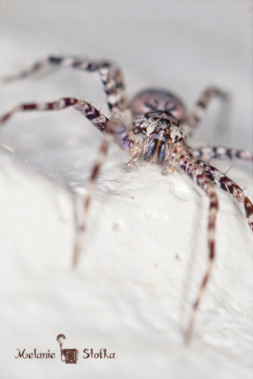 Got some nice detail on a brown house spider :)