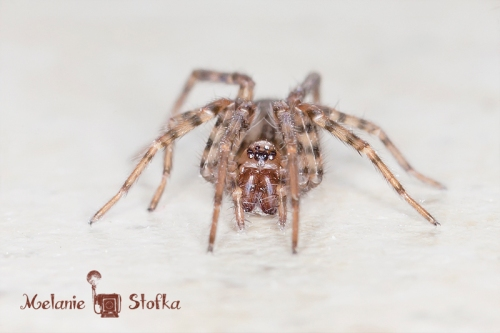 Glamor Girl found this spider in the BATHROOM!  Eeek!