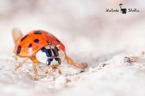 A Ladybug came out to enjoy some sunshine.