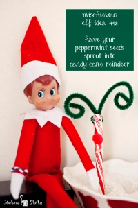 What happens if you plant a peppermint seed?  A candy cane reindeer of course!